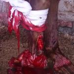 1. Перелом задней конечности у лошади