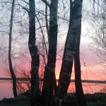 Красивые пейзажи 2015 - березки
