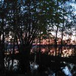 Природа Июнь 2016 (3)