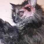2. Удаление глаза кошке