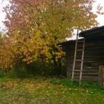 Золотая осень 2015 - домик