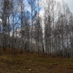 landskap-2011-03-23 (40)_resize