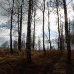 landskap-2011-03-23 (41)_resize
