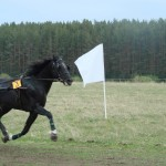 kostino-2011-2 (27)