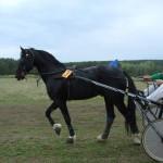 kostino-2011-2 (32)