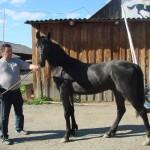 vasilljevy (16)
