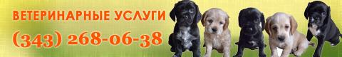 Телефон ветеринарной клиники