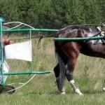 И на конных соревнованиях бывают аварии_thumb