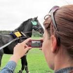 11. Вороной Раздор из Костино - красивая лошадь