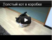 Толстый кот залез в коробку