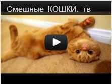 Забавные кошки видео