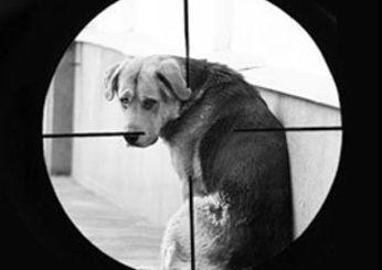 anti-doghunters
