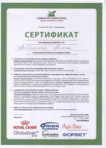 Сертификат по лекциям