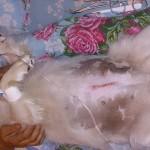 После операции удаление матки