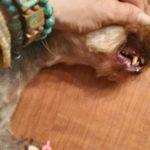 После удалеия молочных зубов