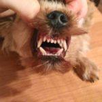 После удаления молочных зубов и чистки всех зубок