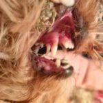 Зубки в два ряда