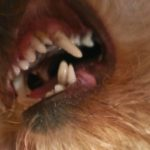Зубки в два ряда 2