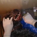 2. анемичность слизистых полости