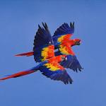 Birds (11)