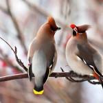 Birds (15)