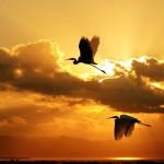 Birds (17)