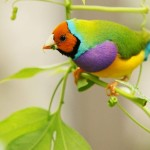 Birds (20)