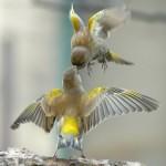 Birds (26)