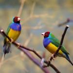 Birds (29)
