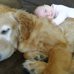 Friendship between children and animals (11)