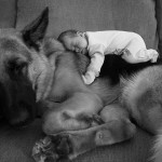 Friendship between children and animals (4)