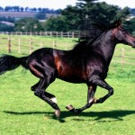Full Stride, Spanish Horse