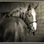 photo,liveart (11)