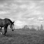 photo,liveart (5)
